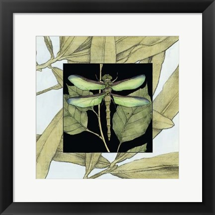 Framed Dragonfly Inset II Print