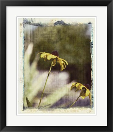 Framed Blackeyed Susans IV Print