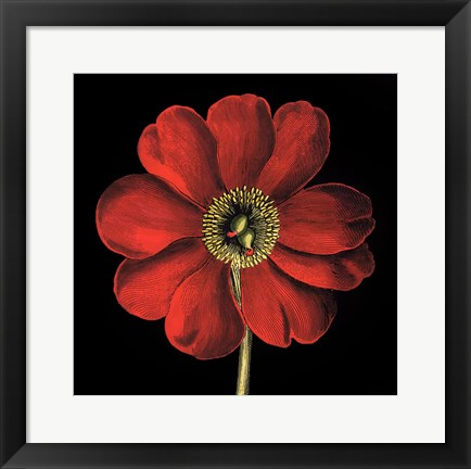 Framed Dramatic Blooms I Print