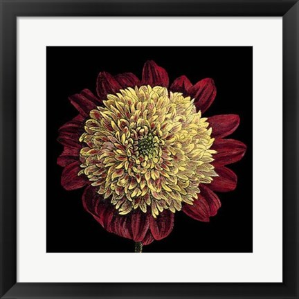 Framed Dramatic Blooms II Print