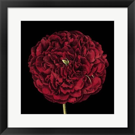 Framed Dramatic Blooms III Print