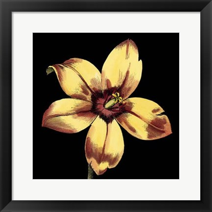 Framed Dramatic Blooms IV Print