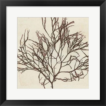 Framed Brilliant Seaweed II Print