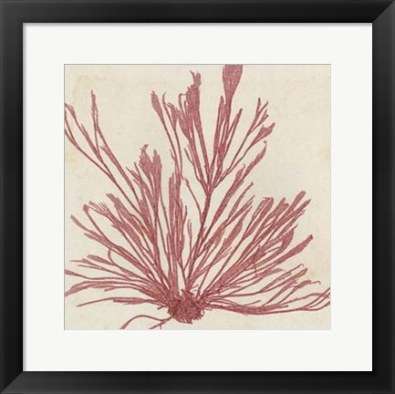 Framed Brilliant Seaweed IX Print
