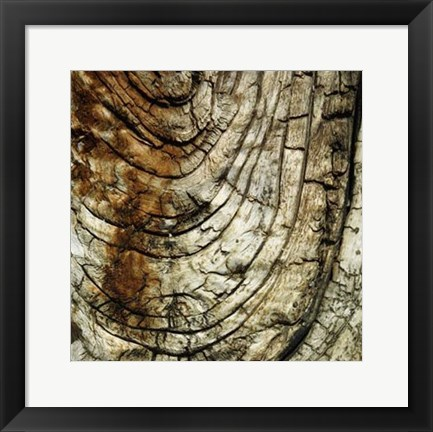 Framed Nature's Textures III Print