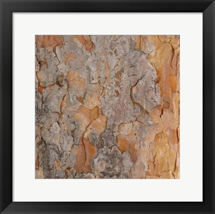 Framed Nature's Textures VII Print