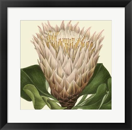 Framed Tropical Vision VI Print