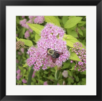 Framed Flight of the Bumble Bee I Print