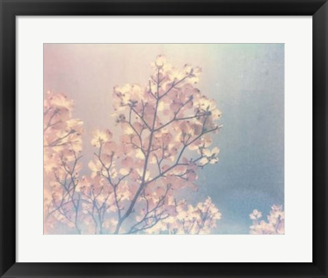 Framed Flowering Dogwood I Print