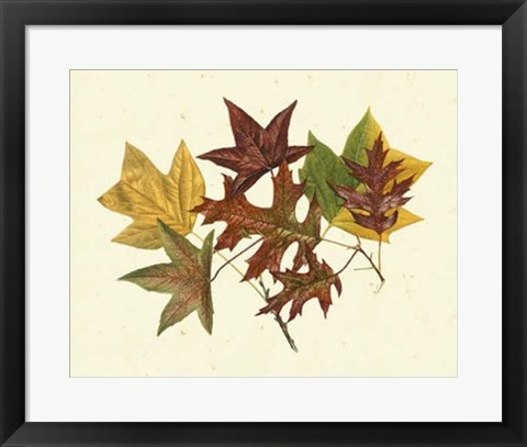 Framed Tulip Tree, Sweet Gum & Scarlet Oak Print