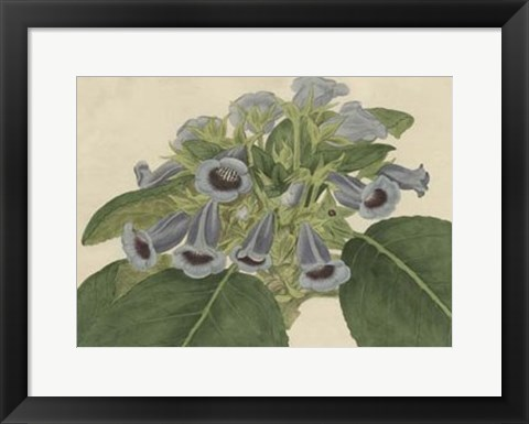 Framed Tropical Beauty IV Print