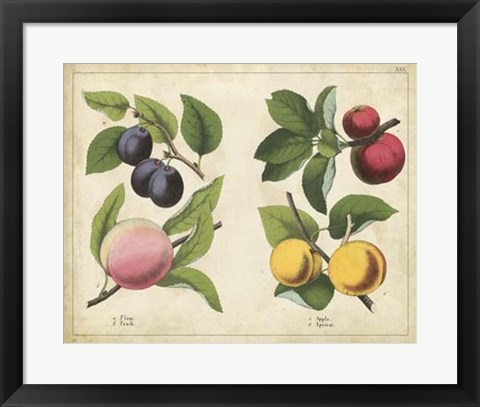 Framed Kitchen Fruits I Print