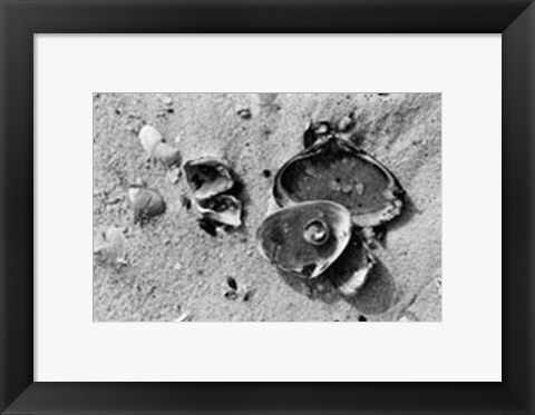 Framed Sand Treasures II Print