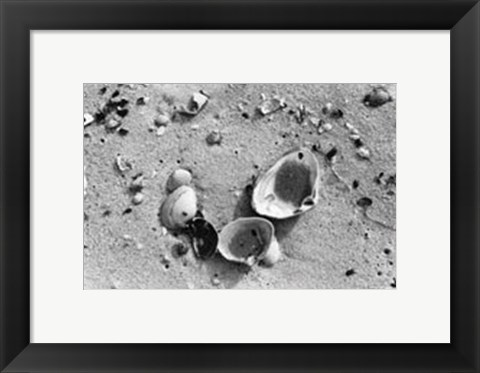 Framed Sand Treasures IV Print