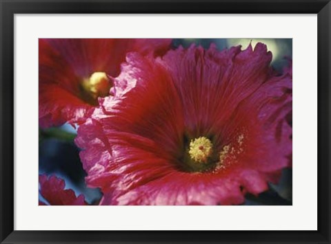 Framed Red Hollyhock Print