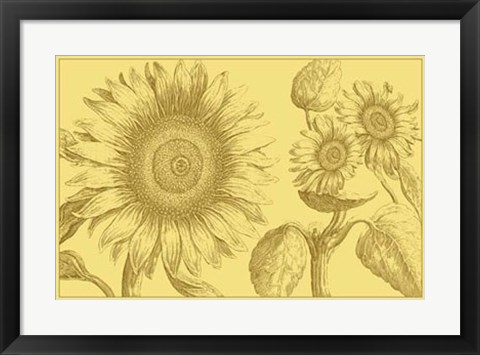 Framed Golden Sunflowers II Print