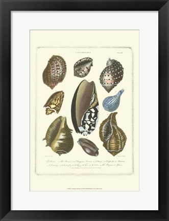 Framed Conchology Collection II Print