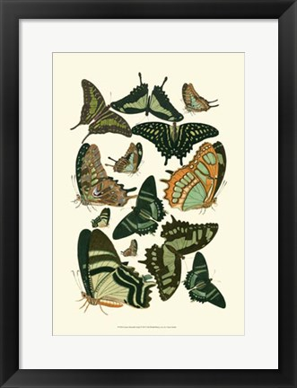 Framed Green Butterfly Study Print