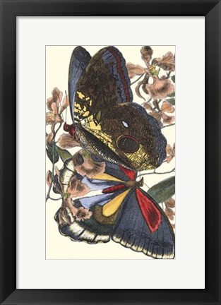 Framed Butterfly IV Print