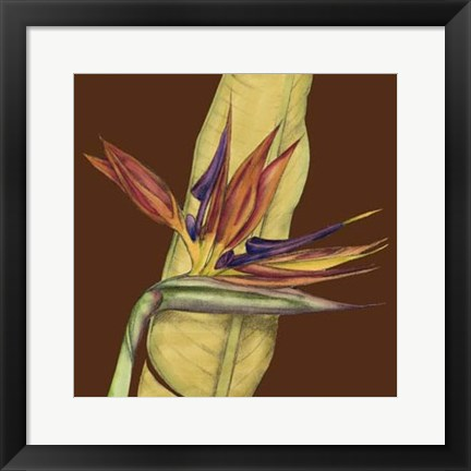 Framed Striking Tropical I Print