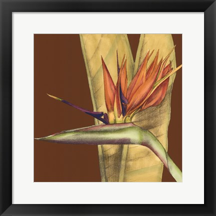 Framed Striking Tropical II Print