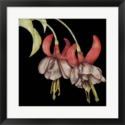 Framed Graphic Fuchsia II Print