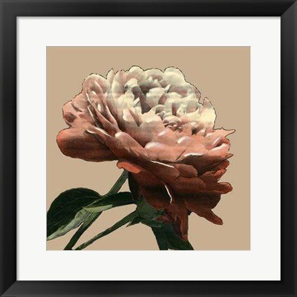 Framed Heirloom Rose I Print