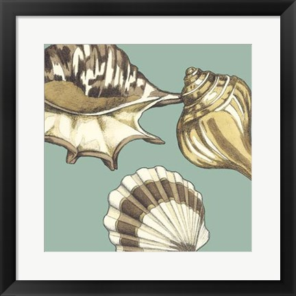 Framed Shell Trio on Blue III Print