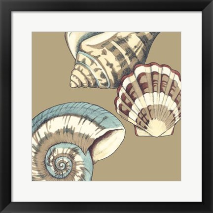 Framed Shell Trio on Khaki II Print