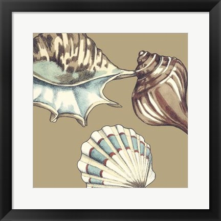 Framed Shell Trio on Khaki III Print