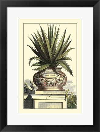 Framed Antique Munting Aloe I Print