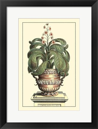 Framed Antique Munting Aloe II Print