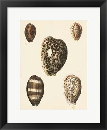 Framed Antique Diderot Shells III Print