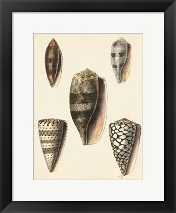 Framed Antique Diderot Shells IV Print