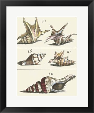 Framed Seashell Menagerie IV Print