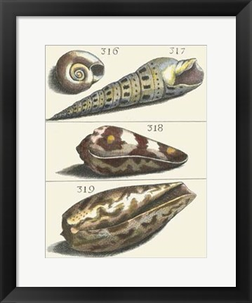 Framed Seashell Menagerie V Print