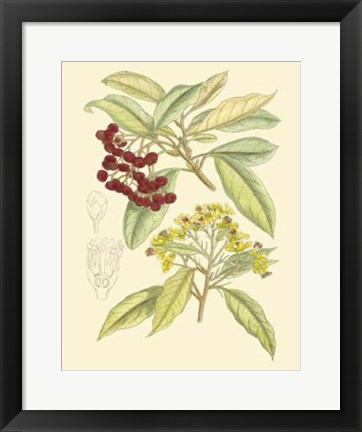 Framed Berries & Blossoms I Print