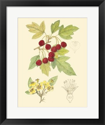 Framed Berries & Blossoms III Print