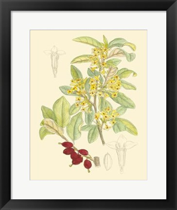 Framed Berries & Blossoms IV Print