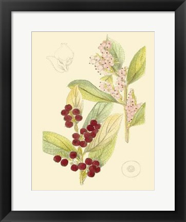 Framed Berries & Blossoms VI Print