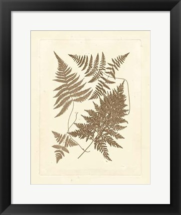 Framed Sepia Ferns VI Print
