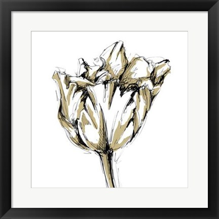 Framed Tulip Sketch I Print