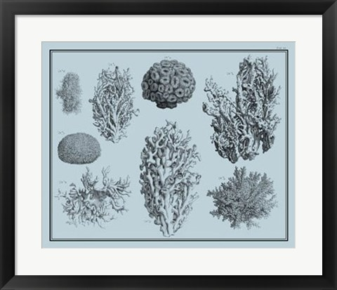 Framed Aegean Coral on Blue II Print