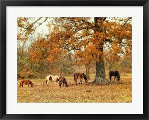 Framed Calmly Grazing Print