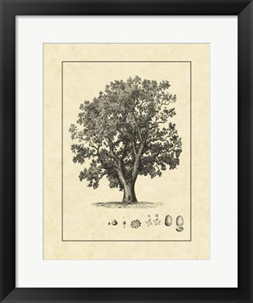 Framed Vintage Tree II Print