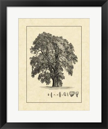 Framed Vintage Tree IV Print