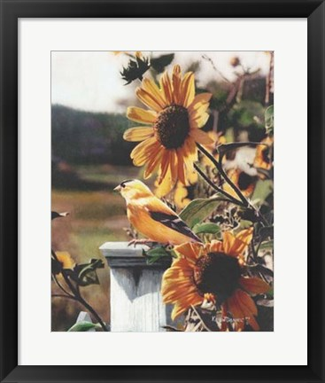 Framed Golden Morning Print