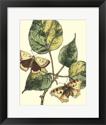 Framed Butterflies & Leaves II Print