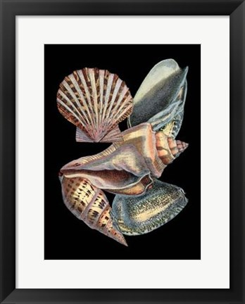 Framed Treasures of the Sea II Print