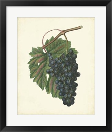 Framed Plantation Grapes I Print